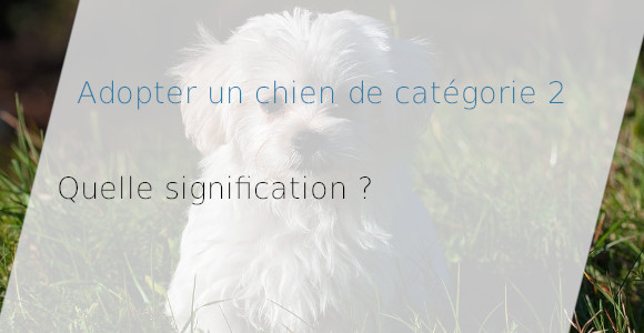 adopter chien catégorie 2