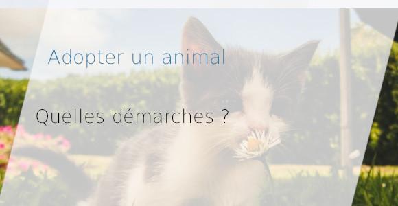 adopter animal